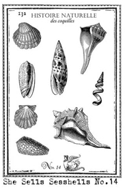 Shells Stamp small